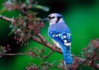 Bird Picture Film