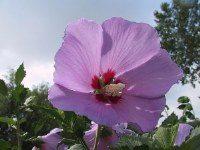 Flower Photo Film